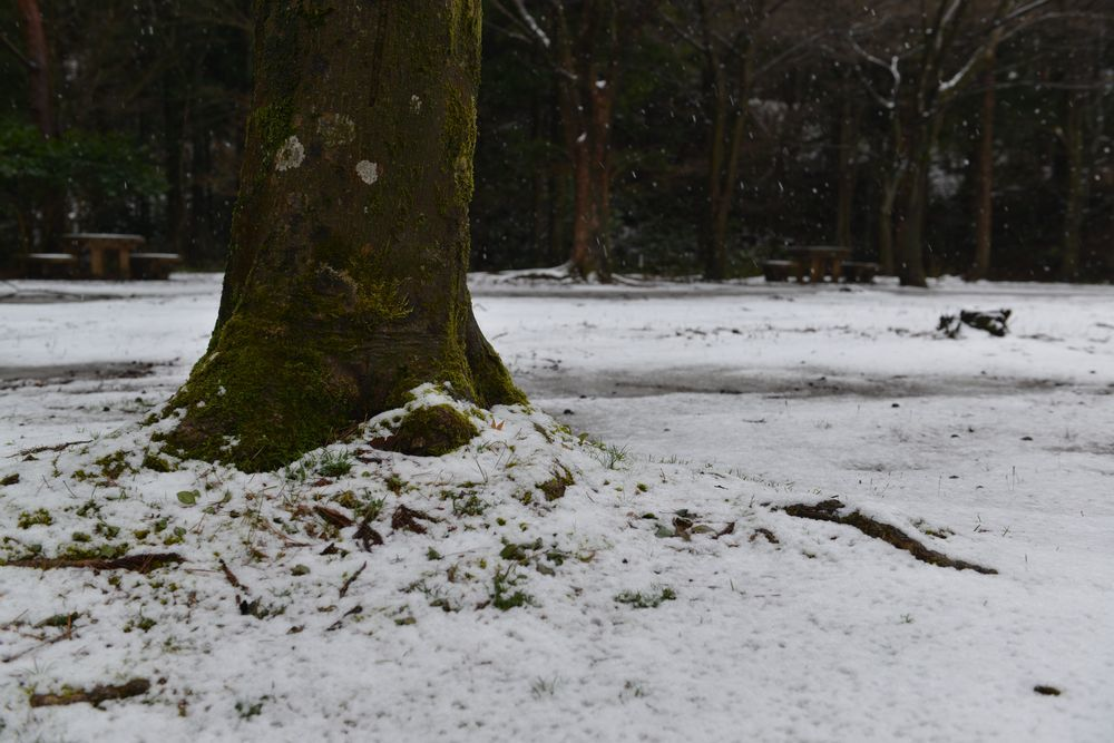 雪の公園-5