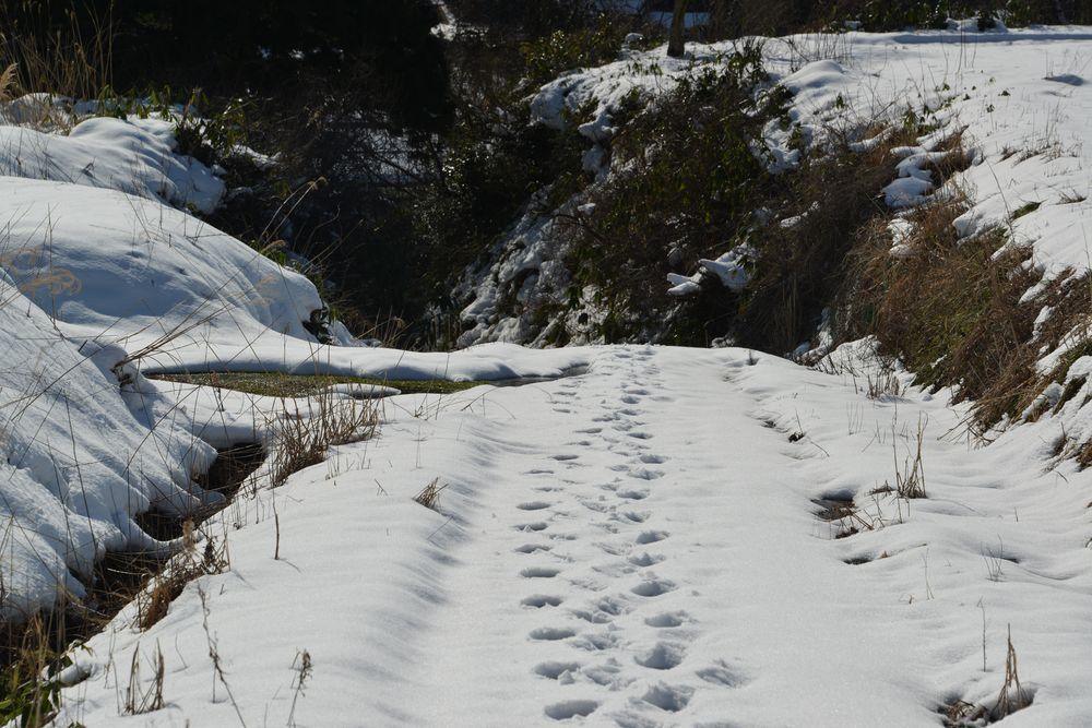 里山の雪-4