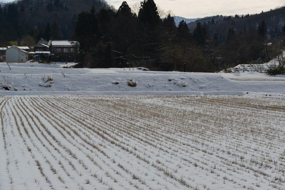 里山の雪-5