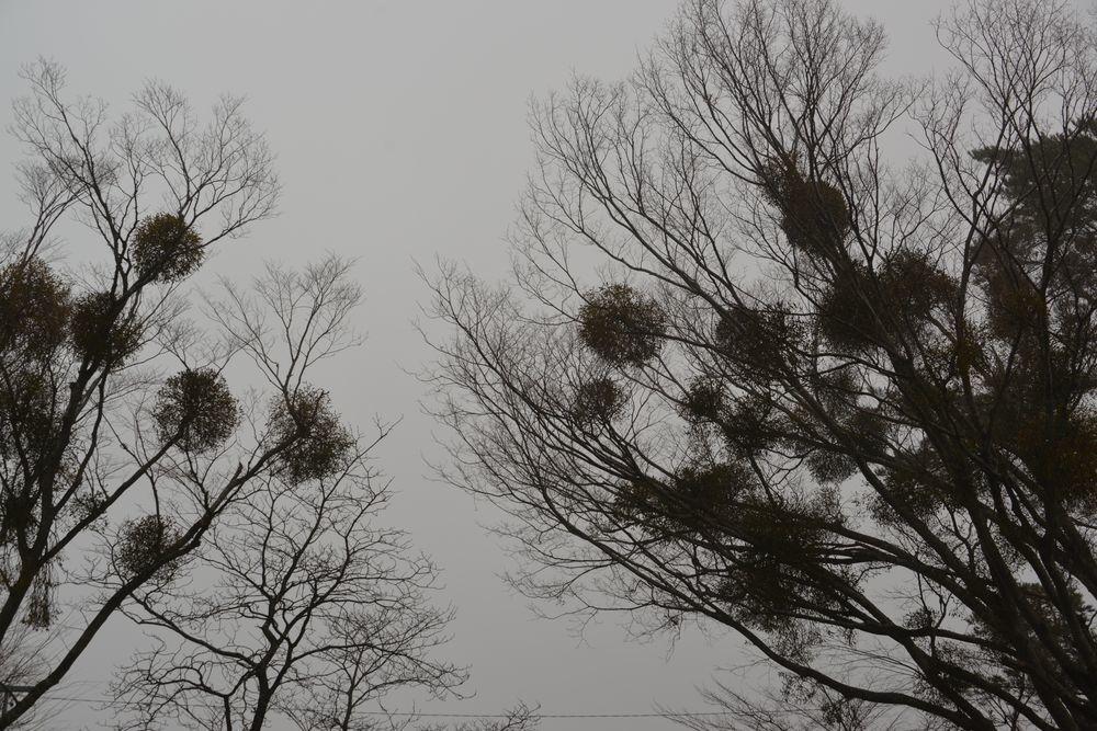 霧の山中湖-6