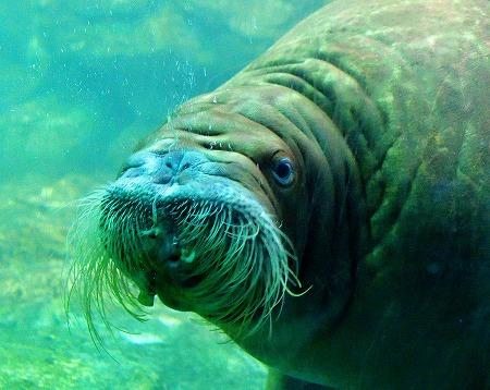 s-シーパラ水族館DSC_4252_01