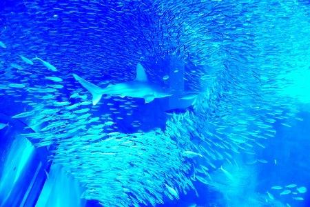 s-シーパラ水族館DSC_4285_01