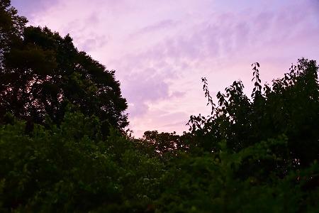 s-向島百花園DSC_5538_01