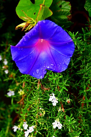 s-花の美術館DSC_6699_01