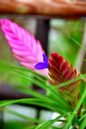 s-花の美術館DSC_6716_01