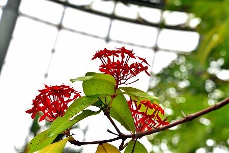 s-花の美術館DSC_6719_01