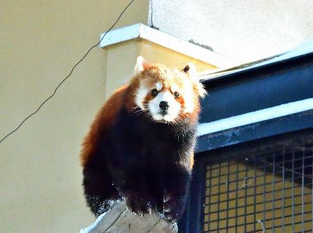 s-旭山動物園DSC_0426_01