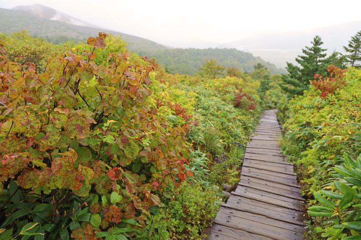 蓬莱山南側の黄葉