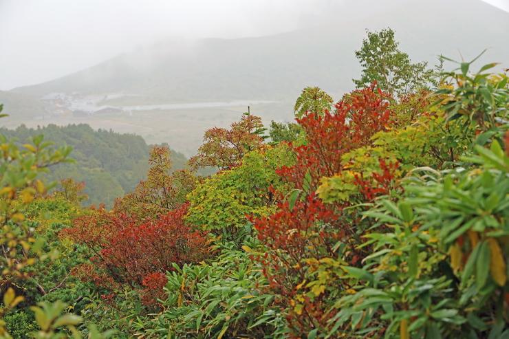 秋の鎌沼探訪