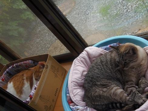 貧乏性な猫1