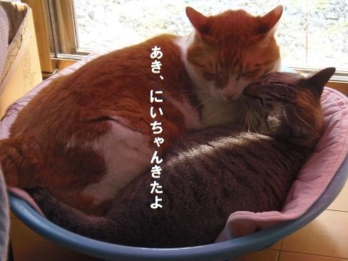 貧乏性な猫4