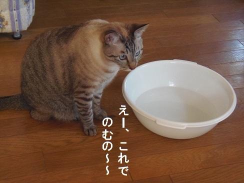 洗面器で2