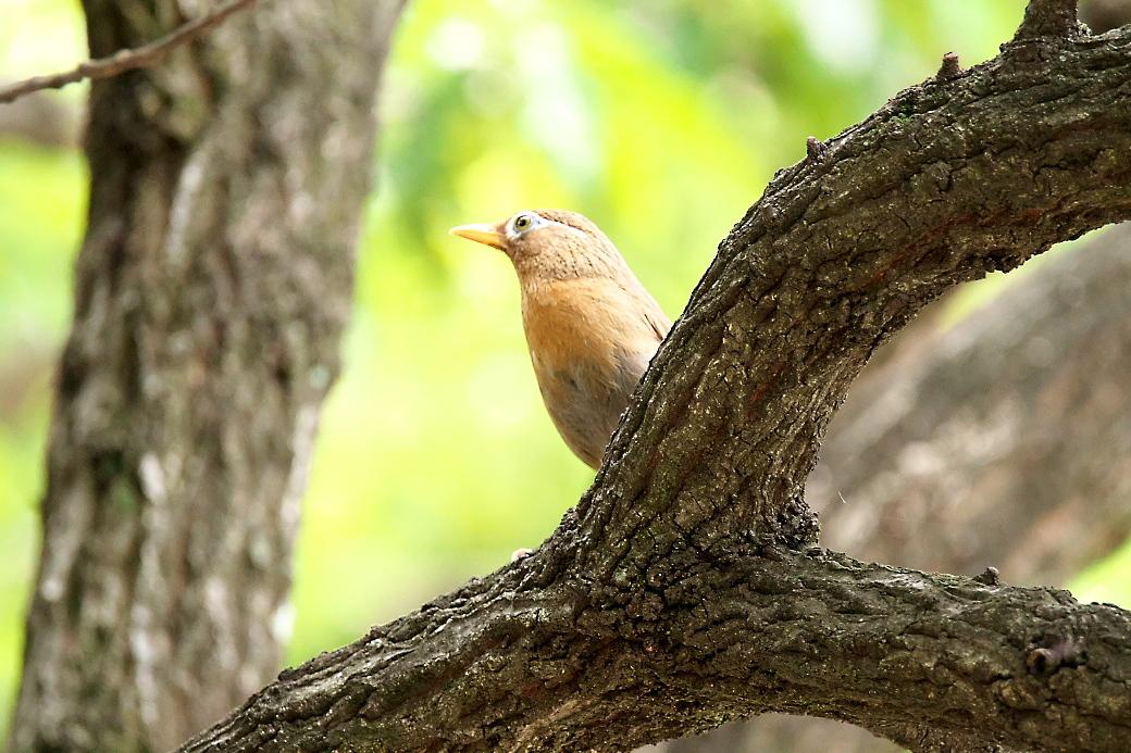 公園でみた鳥さんたち_2