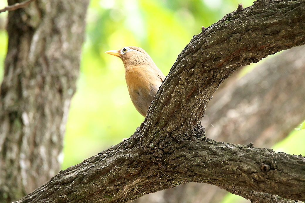 公園でみた鳥さんたち_3