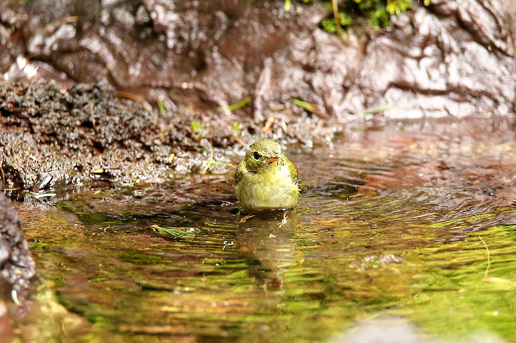 水浴びの様子_2