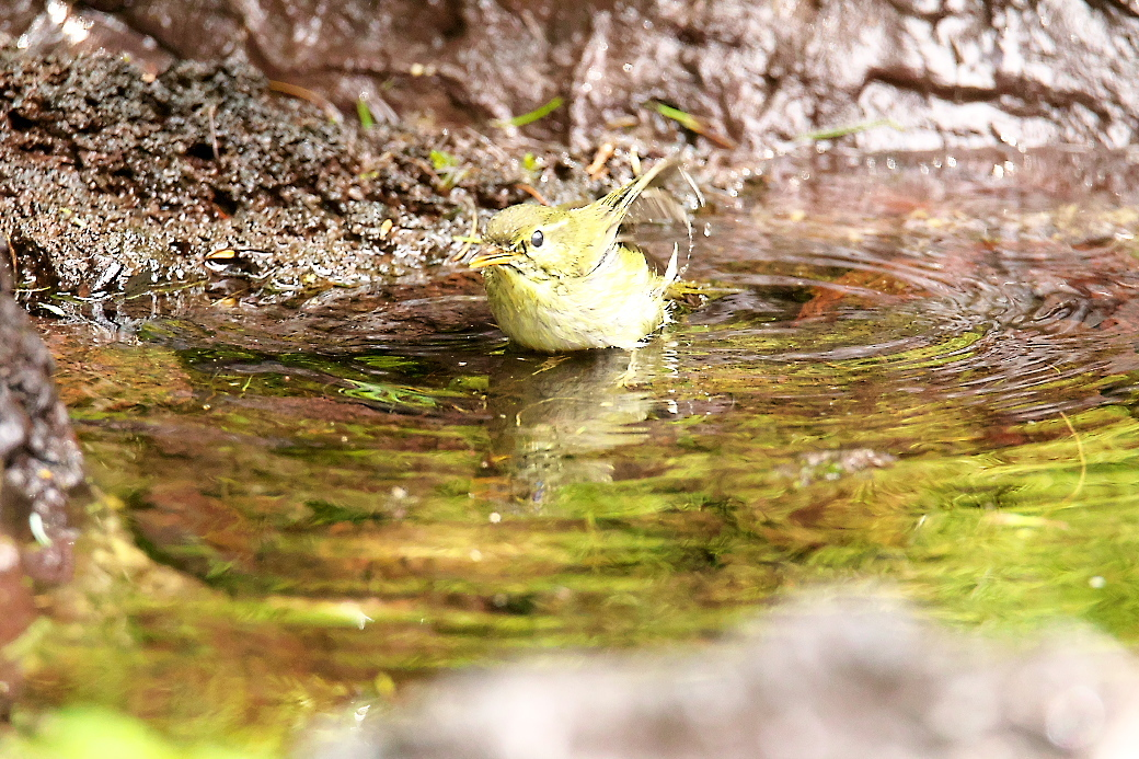 水浴びの様子_4