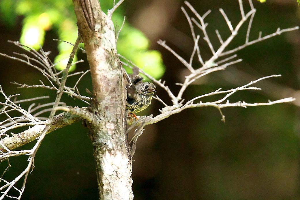 樹上のポーズ_1