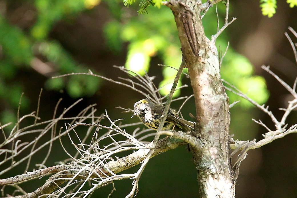 樹上のポーズ_2