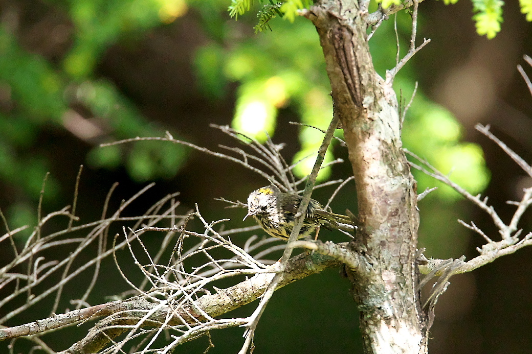 樹上のポーズ_3