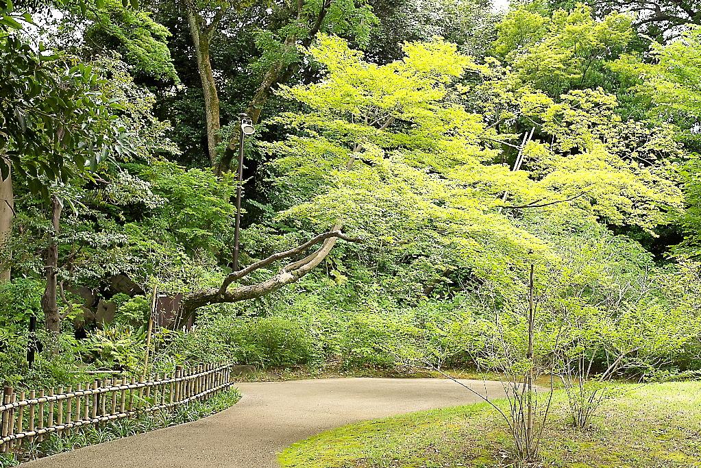 日本庭園(1)_1