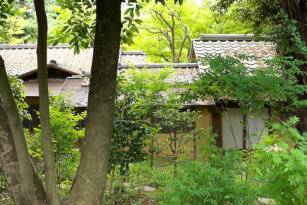 日本庭園(1)_2
