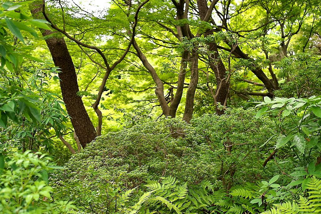 日本庭園(1)_5