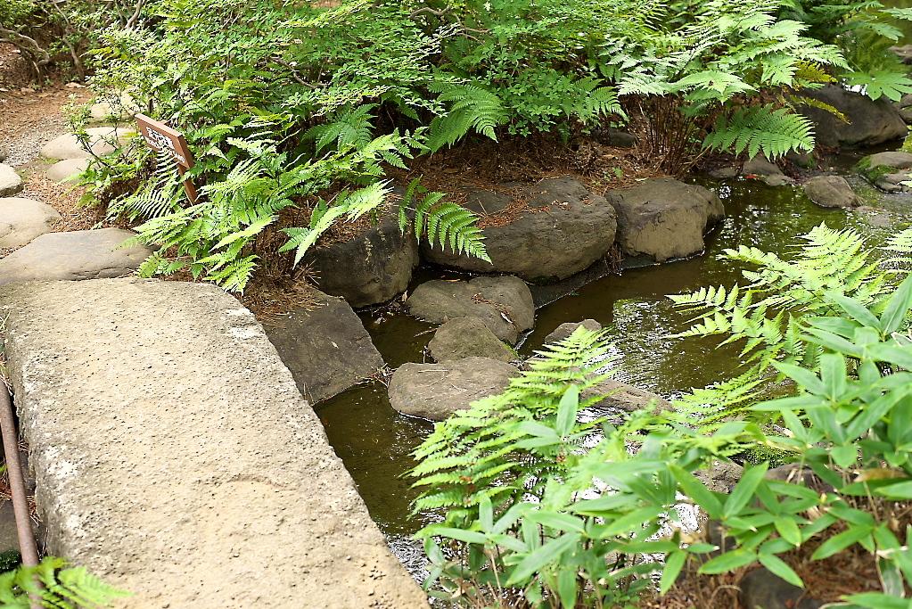日本庭園(1)_6