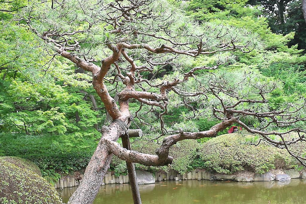 日本庭園(1)_11