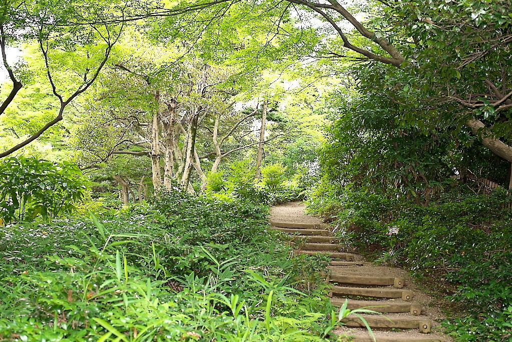 日本庭園(1)_12