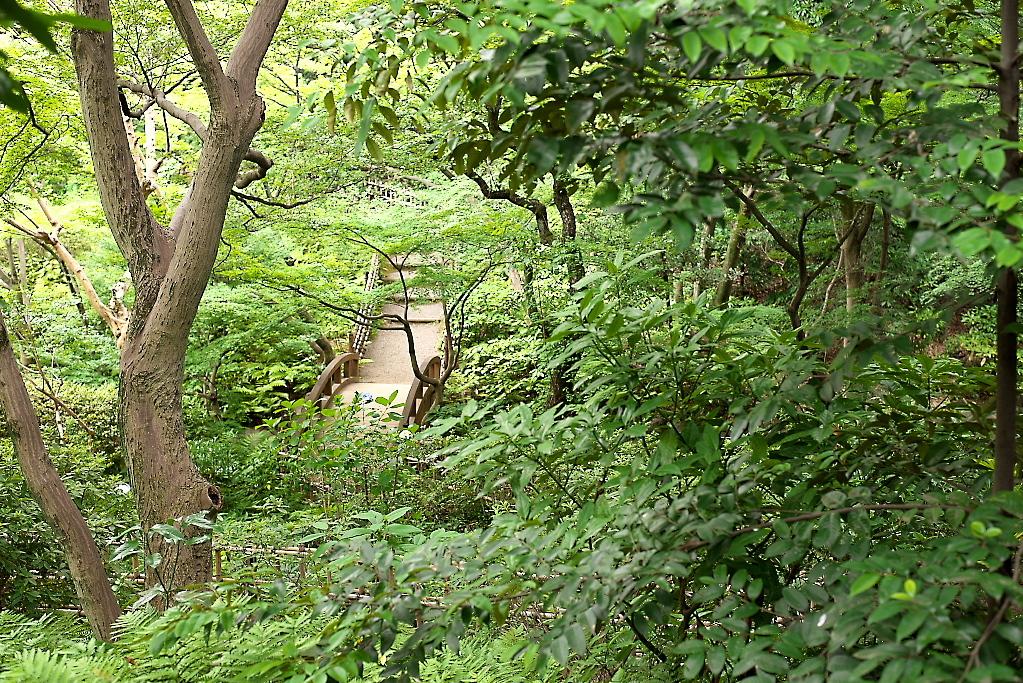 日本庭園(1)_17