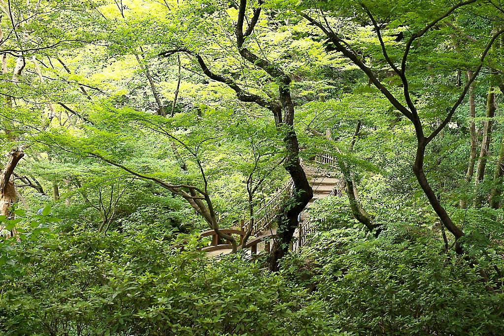 日本庭園(1)_18