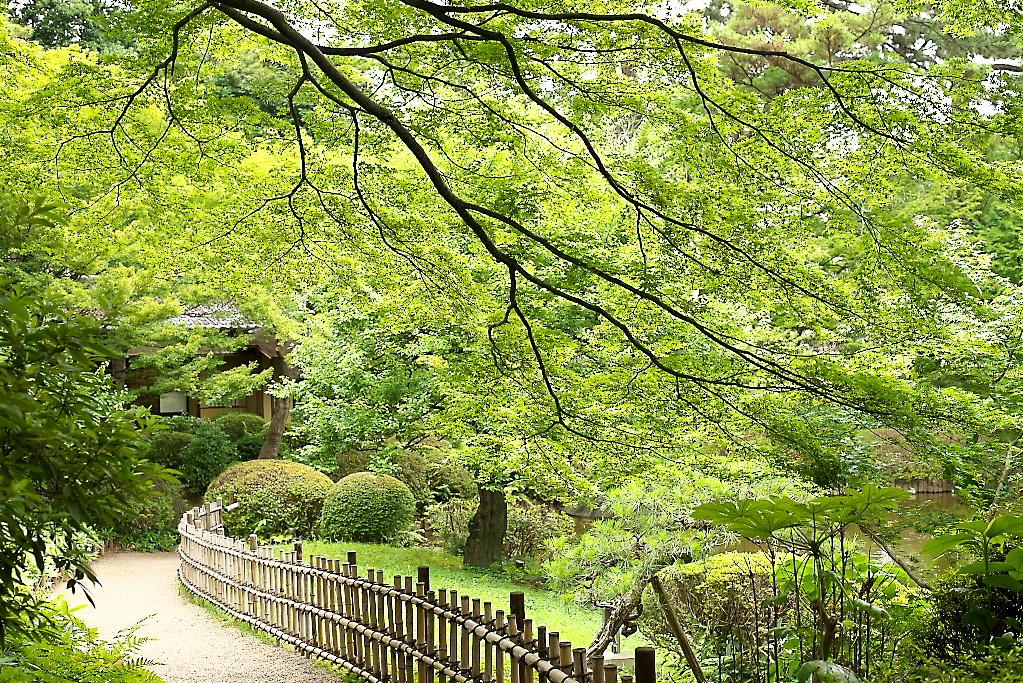 日本庭園(1)_19