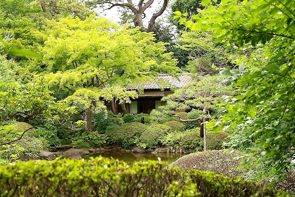 日本庭園(2)_1