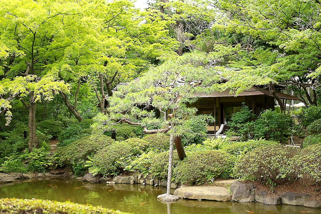 日本庭園(2)_3