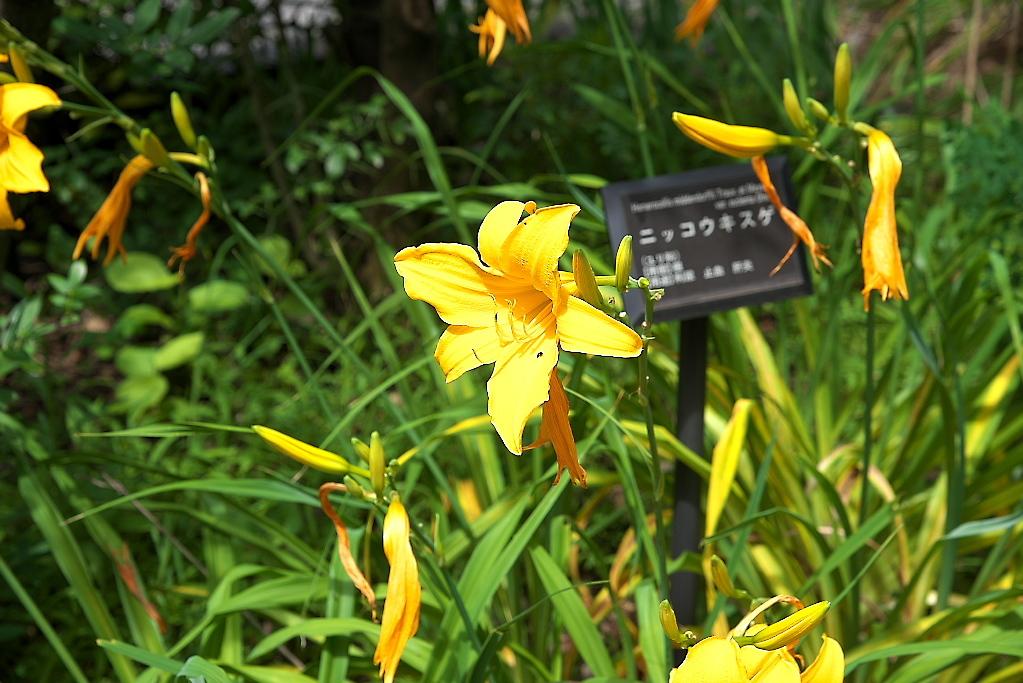 薬草園(1)_1