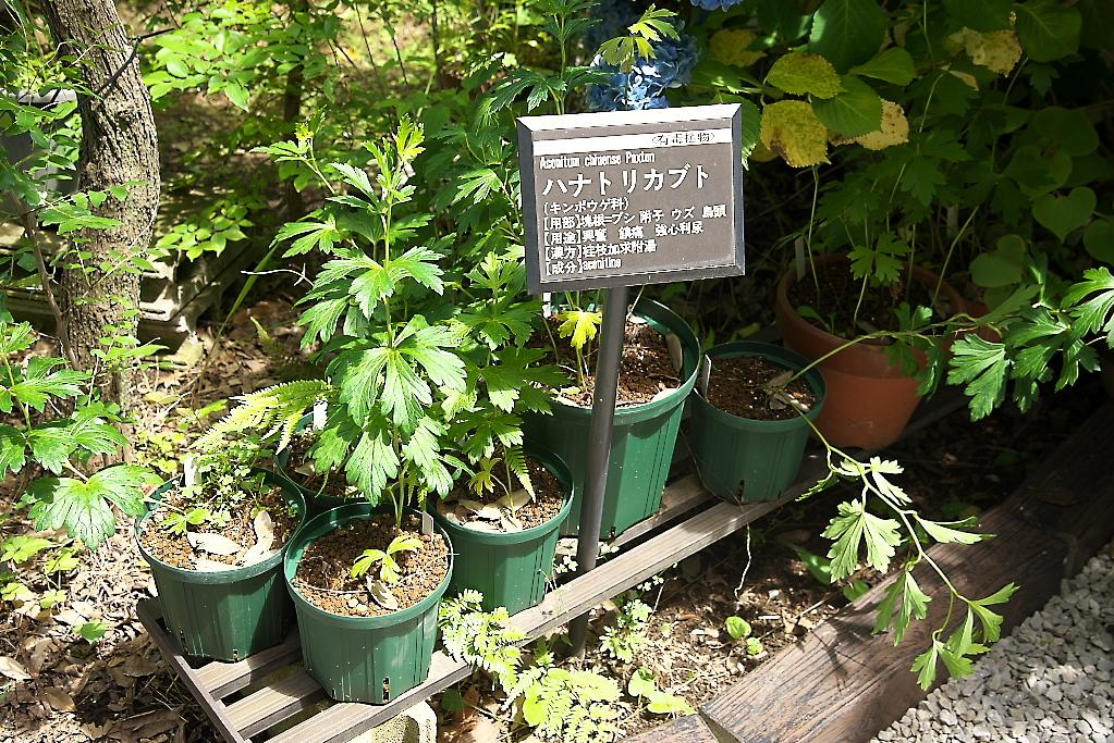 薬草園(1)_9