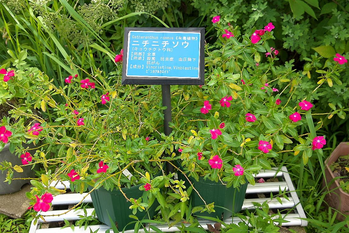 薬草園(1)_10