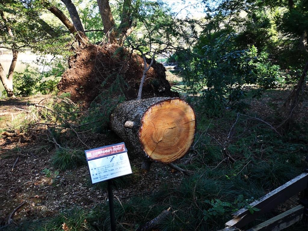 超大型台風での被害_4