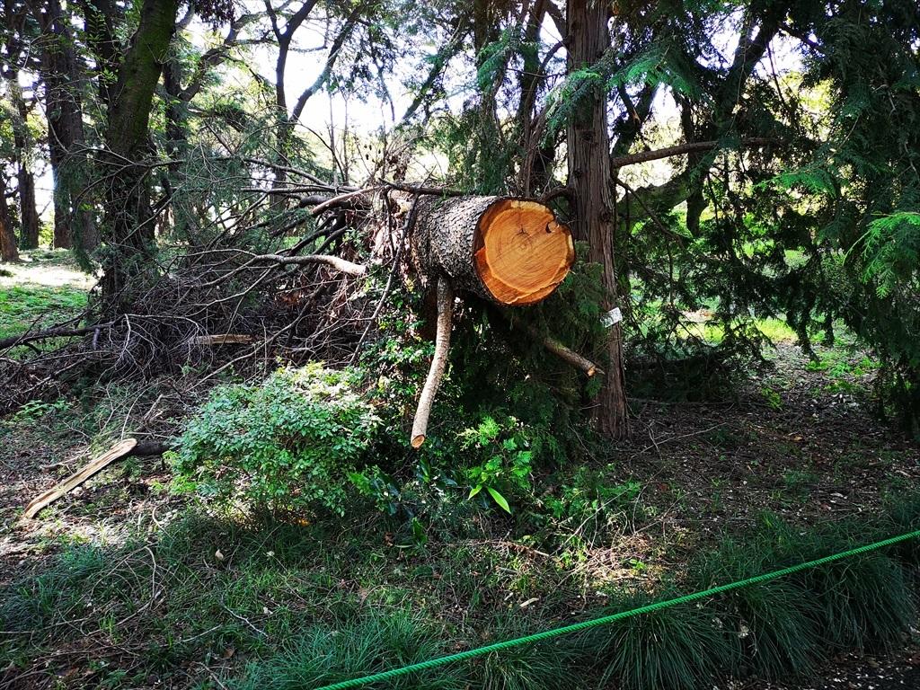 超大型台風での被害_5