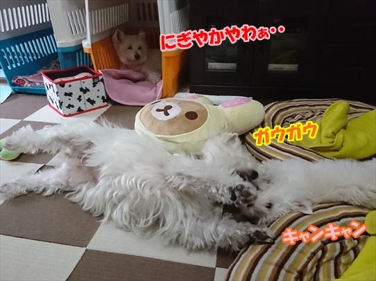 azukiaiharu1.jpg