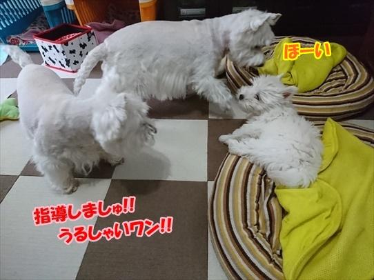 azukiaiharu2_201907121849398da.jpg