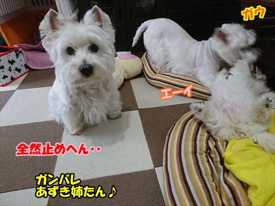 azukiaiharu3.jpg