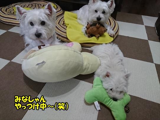 azukiaiharu_20190712184940a33.jpg