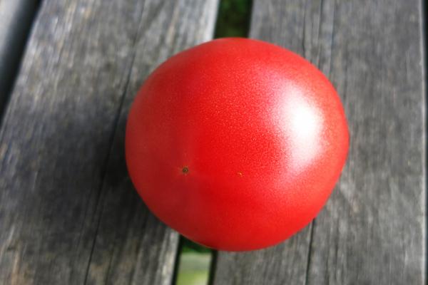 真っ赤なトマト 裏