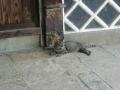 190629美術館近くでごろごろする猫