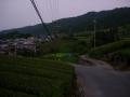 190803夜明けの茶畑を加茂方面へ
