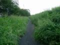190831草の生い茂る、先週の同じ場所