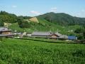 190914石寺の茶畑