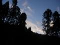 191020木立の間から早朝の青空