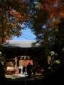 191123神峯山寺門前の紅葉
